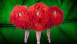 All Events by Date - Viva Momix